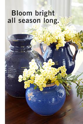 Bloom bright all season long